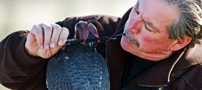 What is Falconry?