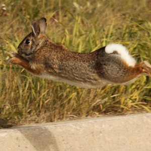 rabbit_curb