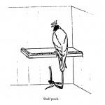 Shelf perch